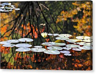 Autumn Reflection Canvas Print by Katherine White