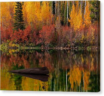 Conifer Canvas Print - Autumn Reflections by Leland D Howard