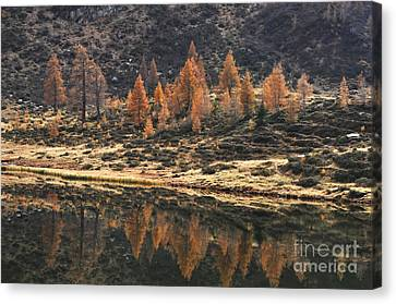 Autumn Reflections Canvas Print by Simona Ghidini