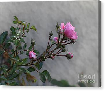 Autumn Rose Canvas Print by Lutz Baar