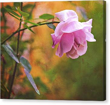 Autumn Rose Canvas Print by Theresa Tahara