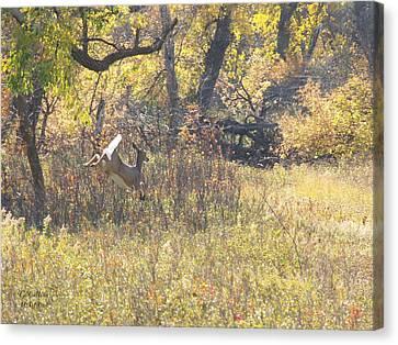 Autumn Run Canvas Print
