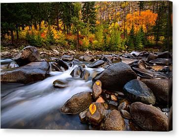 Canvas Print featuring the photograph Autumn Rush by Dan Mihai