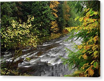 Autumn, Salmon River, Oregon, Usa Canvas Print by Michel Hersen