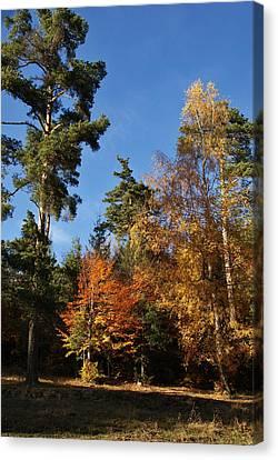 Autumn Scene Canvas Print by Bogdan M Nicolae