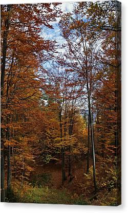 Autumn Scene II Canvas Print by Bogdan M Nicolae