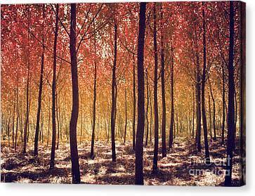 Autumn Scenic Canvas Print by Carlos Caetano