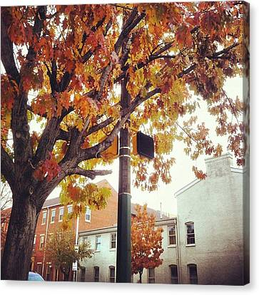 Canvas Print featuring the photograph Autumn South Charles Street by Toni Martsoukos