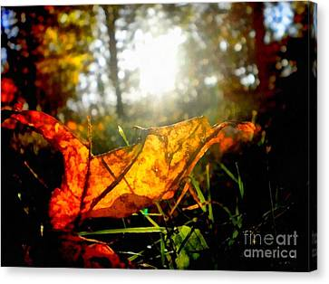Sun Rays Canvas Print - Autumn Splendor by Janine Riley