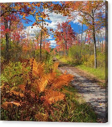 Autumn Splendor Square Canvas Print