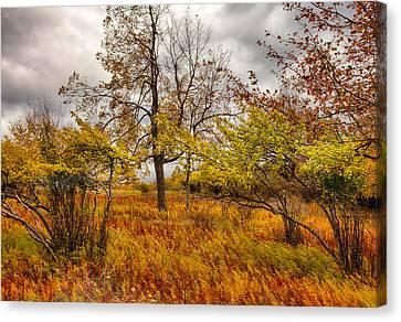 Autumn Storm At Dolly Sods West Virginia I Canvas Print by Dan Carmichael