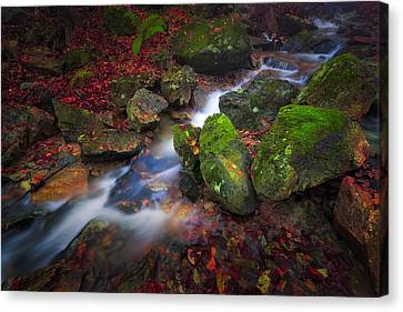 Autumn Stream Canvas Print by Giovanni Allievi