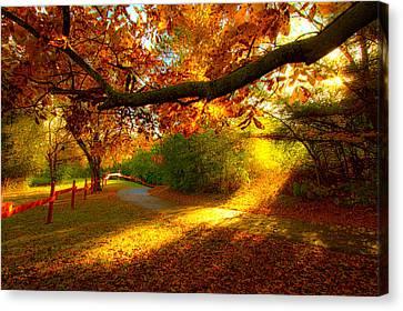 Autumn Stroll Canvas Print by Phil Koch