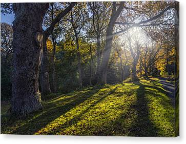 Autumn Stroll V2 Canvas Print by Ian Mitchell