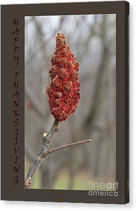 Canvas Print - Autumn Sumac  Thanksgiving Greeting Card #1 by Andrew Govan Dantzler