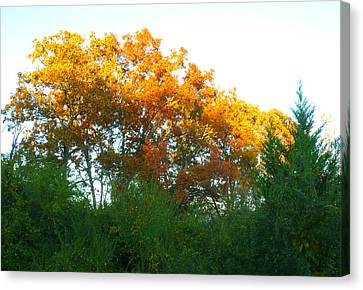 Autumn Sunlight Canvas Print by Pete Trenholm