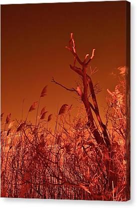 Autumn Surprise  Canvas Print by Thomas  MacPherson Jr