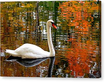 New England Autumn Canvas Print - Autumn Swan by Lourry Legarde