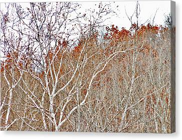 Autumn Sycamores Canvas Print by Bruce Patrick Smith