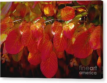 Autumn Canvas Print by Sylvia  Niklasson