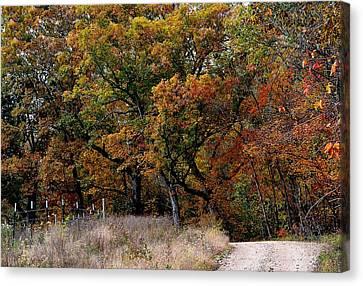 Autumn Trail 2 Canvas Print