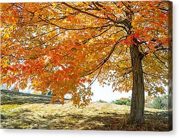 Autumn Tree - 2 Canvas Print