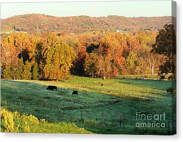 Farmland In Autumn Canvas Print by Adam Long