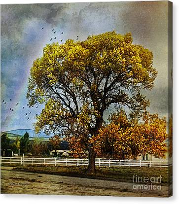 Autumn Tree In Anza Canvas Print by Rhonda Strickland