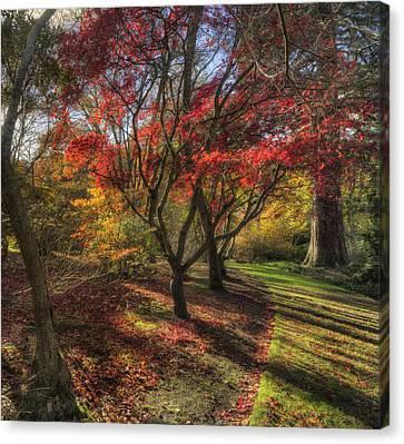 Autumn Tree Sunshine Canvas Print by Ian Mitchell