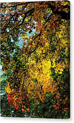 Autumn Scene Canvas Print - Autumn Tree  by Tommytechno Sweden