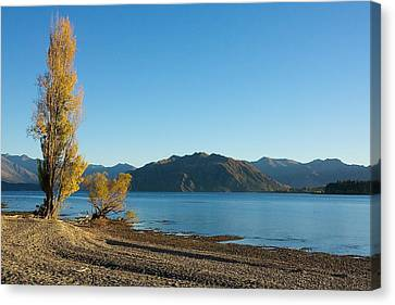 Autumn Trees At Lake Wanaka Canvas Print by Stuart Litoff