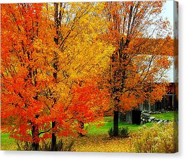 Canvas Print featuring the photograph Autumn Trees By Barn by Rodney Lee Williams