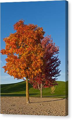Autumn Trees Canvas Print by Celso Bressan