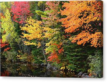 Red Leaf Canvas Print - Autumn Trees, Sheepscot River, Palermo by Michel Hersen