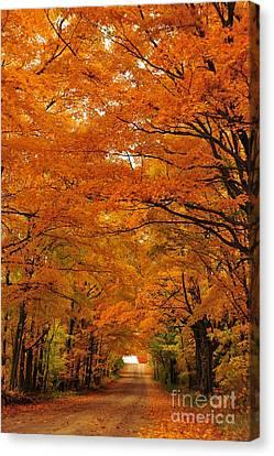 Autumn Tunnel Of Trees 30 Canvas Print by Terri Gostola