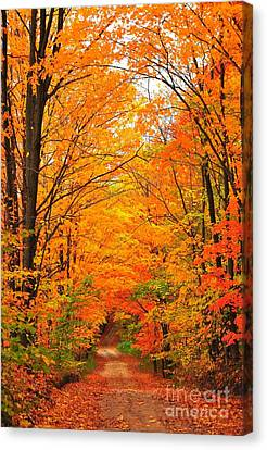 Canvas Print featuring the photograph Autumn Tunnel Of Trees by Terri Gostola
