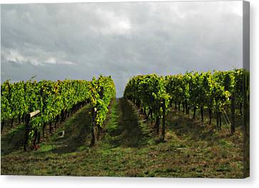 Canvas Print featuring the photograph Autumn Vineyard by Mindy Bench