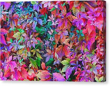 Autumn Virginia Creeper Canvas Print