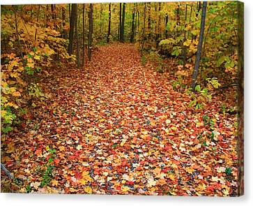 Autumn Walk In Ohio Canvas Print by Dan Sproul