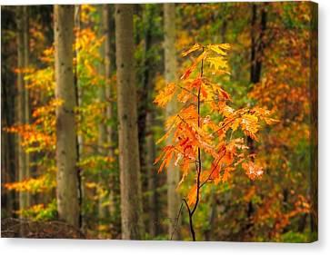 Eifel Canvas Print - Autumn Walk In The Forest by Maciej Markiewicz