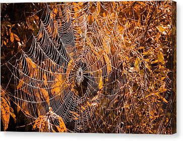 Autumn Web Canvas Print by Brian Stevens