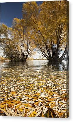 Autumn Willows Lake Tekapo New Zealand Canvas Print