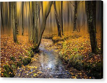 Woodlands Scene Canvas Print - Autumn Woodland by Ian Hufton