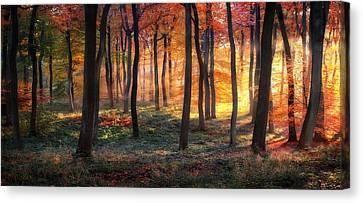 Autumn Woodland Sunrise Canvas Print by Photokes