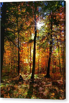 Autumn Woods Canvas Print by Brook Burling