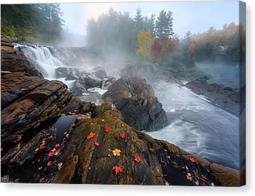 Maple Season Canvas Print - Autumn by Yi Jiang