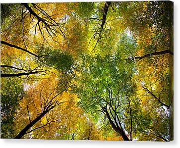 Autumnal Display Canvas Print by Dave Bowman
