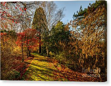 Autumnal Forest Canvas Print by Adrian Evans