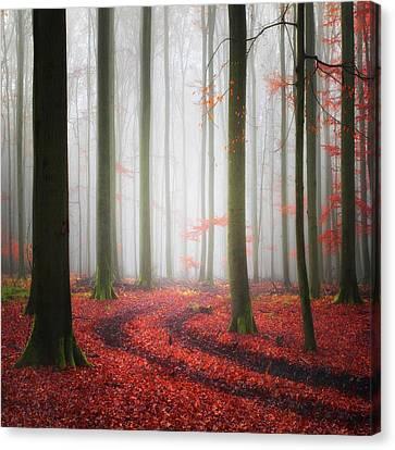 Trace Canvas Print - Autumnal Tracks by Carsten Meyerdierks
