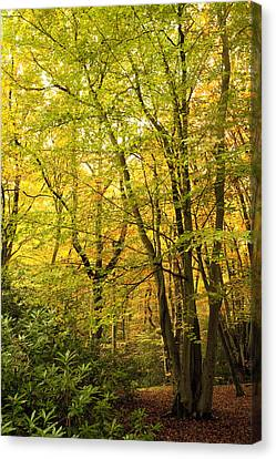 Autumnal Woodland IIi Canvas Print by Natalie Kinnear